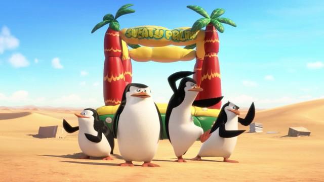 Penguins - Footage 2