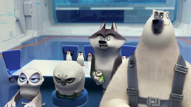 Penguins - Footage 8